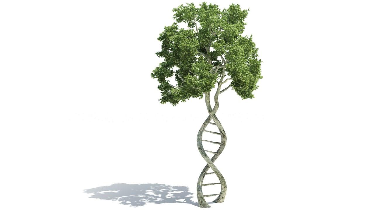 Genetiğimizi keşfediyoruz! Yaşam genetiği testi nerede nasıl yapılır?