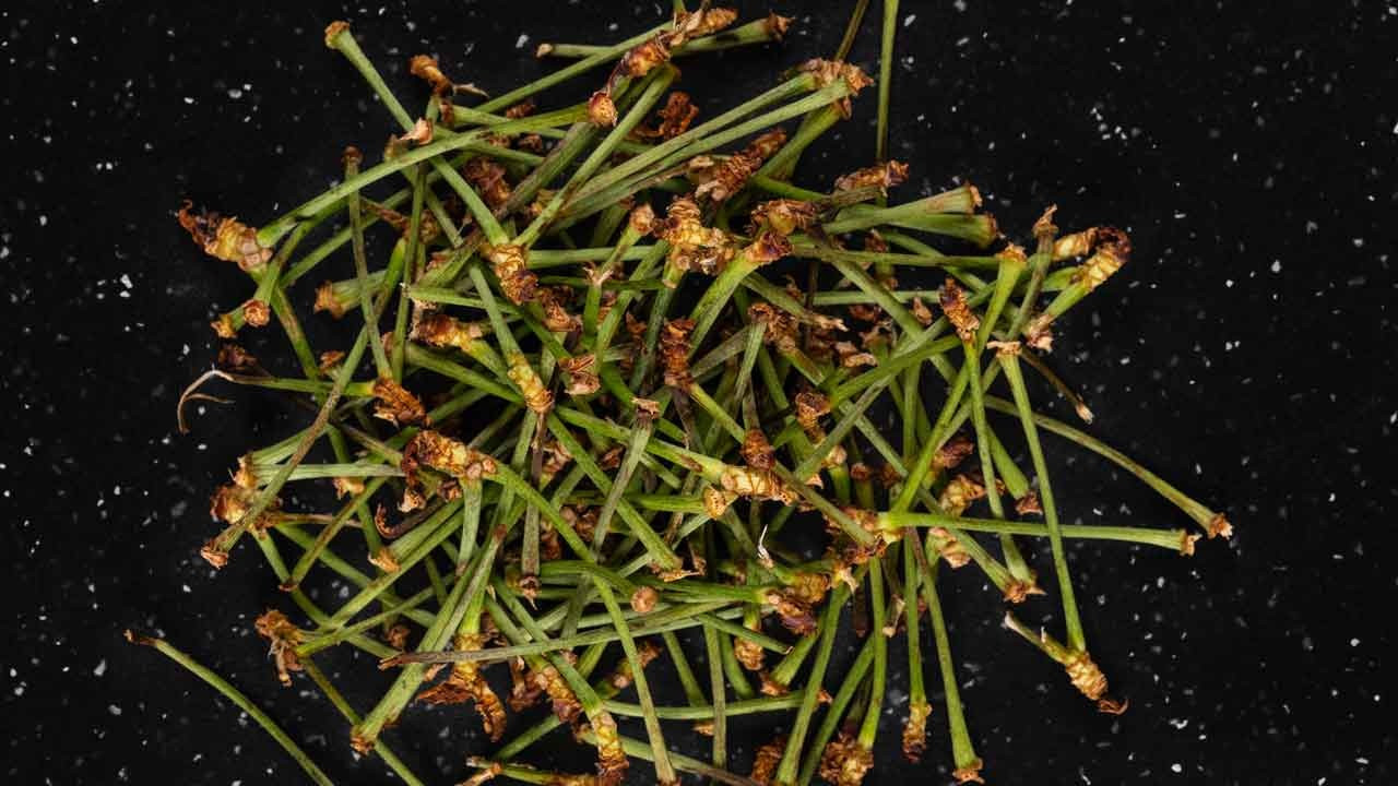Kiraz sapının faydaları nelerdir? İşte kiraz sapının 16 yararı