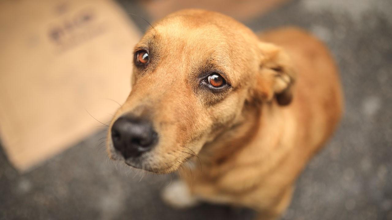 Sokak hayvanlarına 7 ilde ameliyathane ve bakımevi kuruluyor
