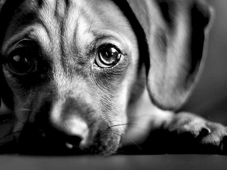 Hayvanlara işkence ve yasalar