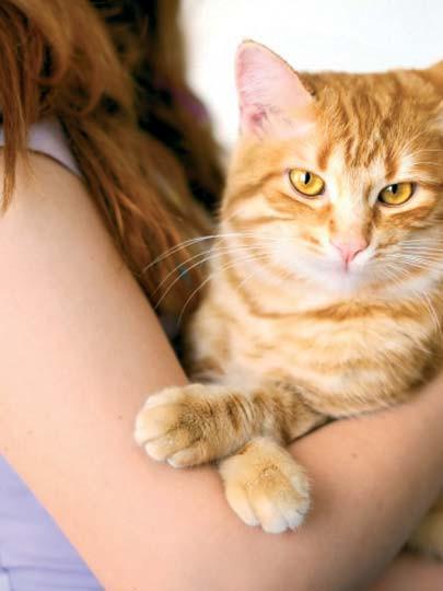 Kedinizi mutlu ve sağlıklı tutmanın püf noktaları