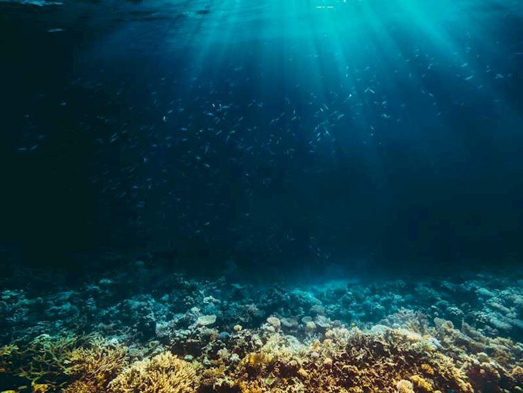 Deniz Altının Büyülü Dünyasına Hoş Geldiniz!