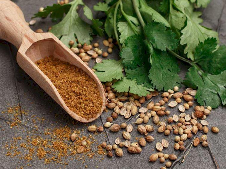 Mutfağınızda şifaya yer açın: Kişniş ve kişniş tohumu faydaları
